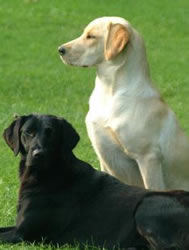 picture of 2 dogs compliments of freephoto.com